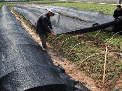 贵州大棚遮阳网
