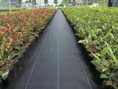 福建绿色园艺地布