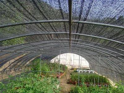 种植遮阳网